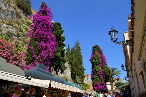 Beautiful bougainvillea in Taormina heading toward the Amphitheater