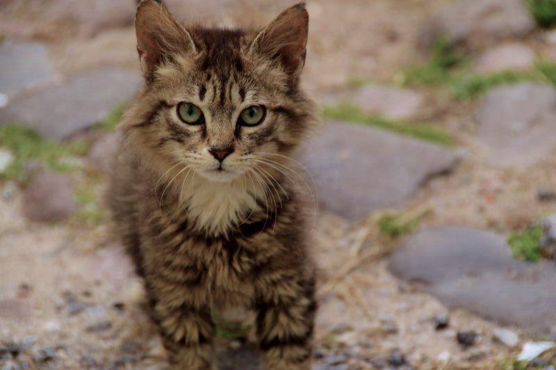 Beautiful little kitten on Lesbos Greece