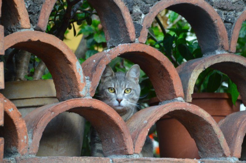 Cat in Taormina