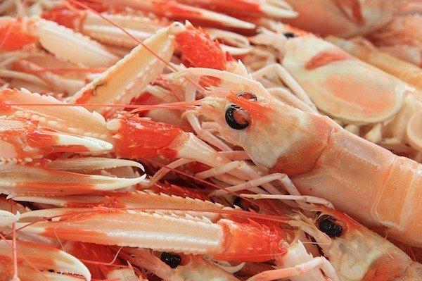 Crustacean in Sardinia